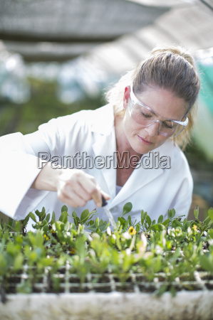 female scientist feeding plant samples with