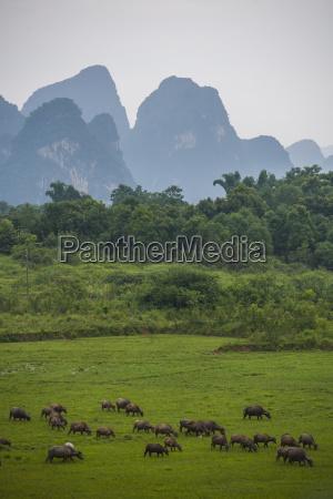 fahrt reisen anhoehe huegel tier landwirtschaft