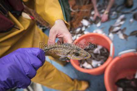 sample catch of fish on research