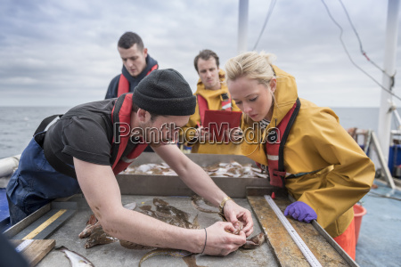 research scientists inspecting fish on research