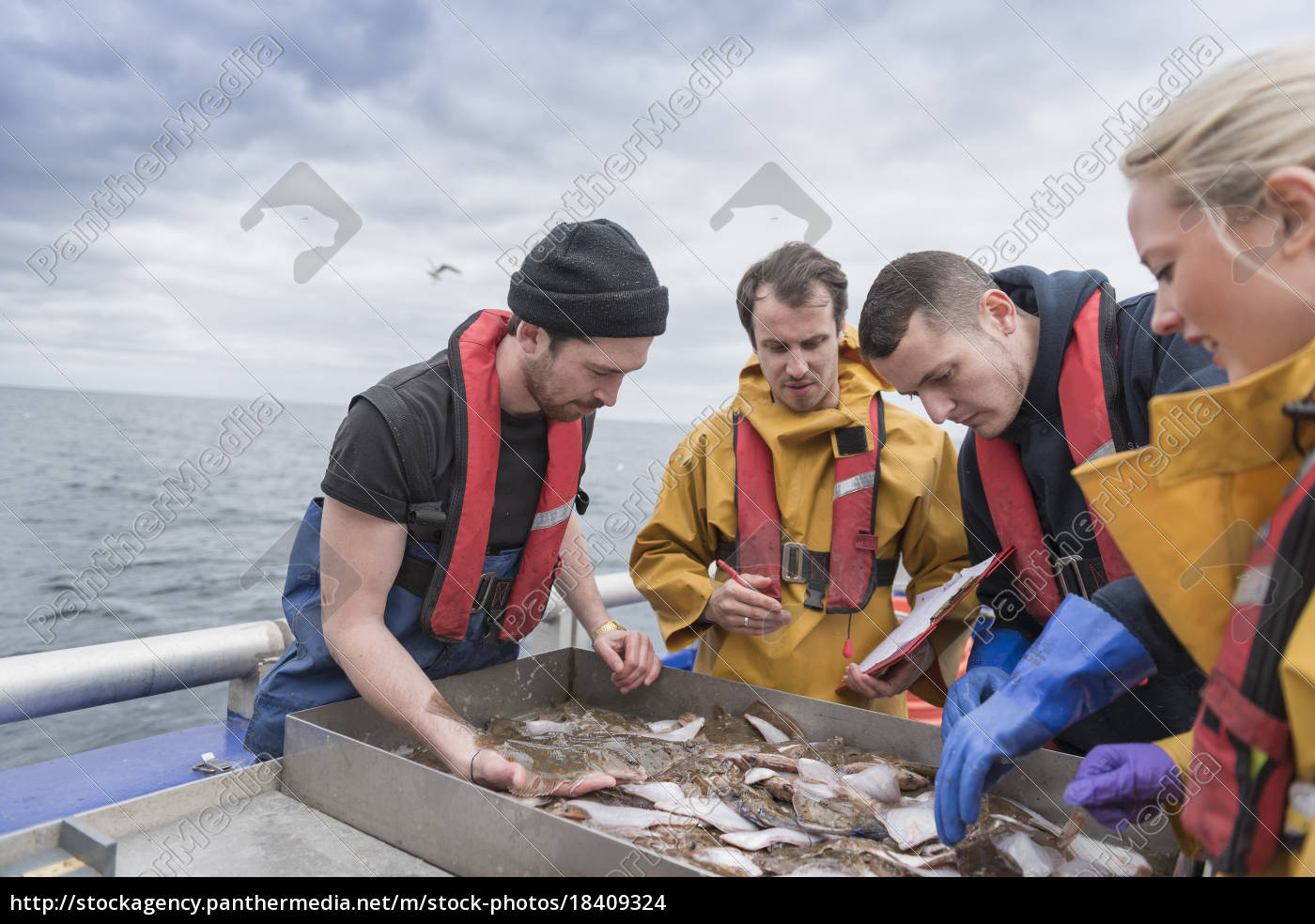 research, scientists, measuring, fish, on, research - 18409324