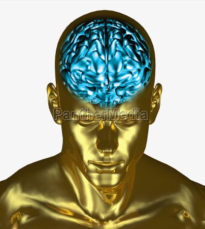 illustration of the brain inside the