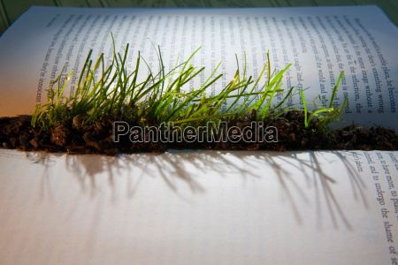 grass sprouting from interior of book