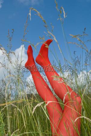 legs in long grass
