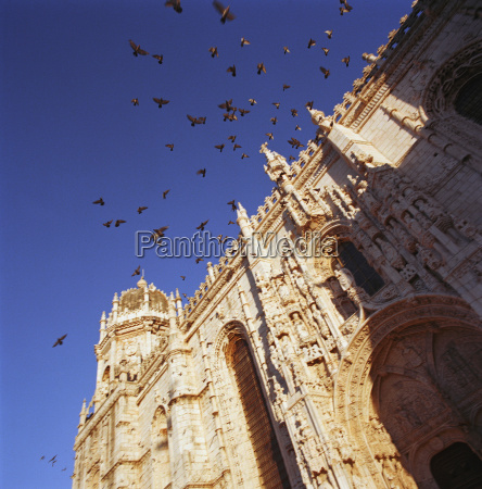 birds flying over cathedral