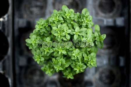 close up of potted green plant