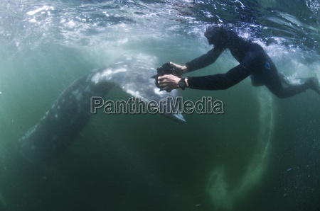 underwater view of freediver photographing tail