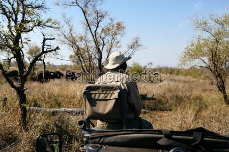 fahrt reisen baum afrika hut outdoor