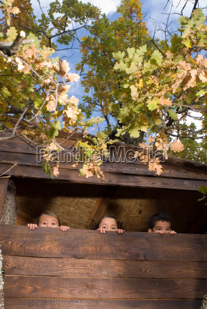 group of kids in a tree