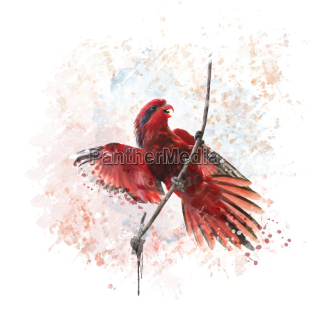 blue streaked lory parrot watercolor