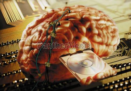 brain wired information