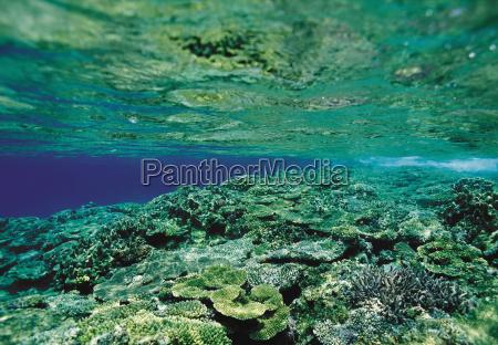 reflexion algen outdoor freiluft freiluftaktivitaet im