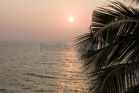 palm leaves and sunset over the