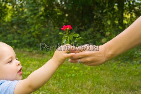 mother handing son a flower