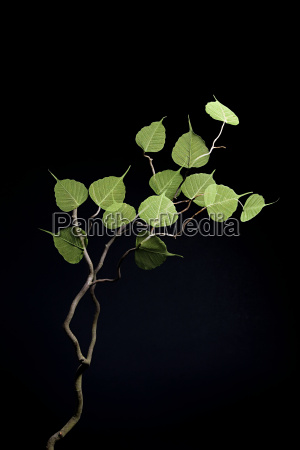 green leaves on a branch