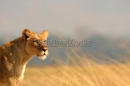 wild afrika savanne outdoor freiluft freiluftaktivitaet