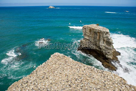 auckland aerial view of gannet rocks