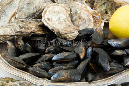 mussels and oysters