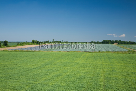green field quebec canada