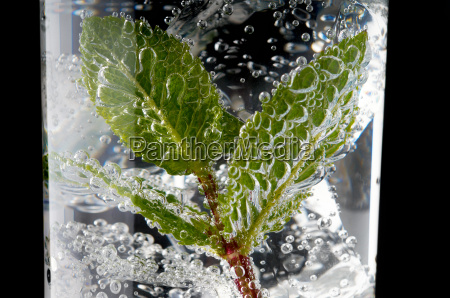 fresh mint leaves and bubbles in