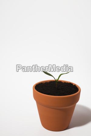 seedling in plant pot on white