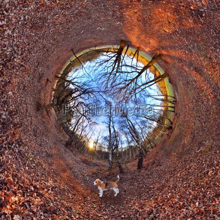 blatt baumblatt baum park sonnenlicht tunnel