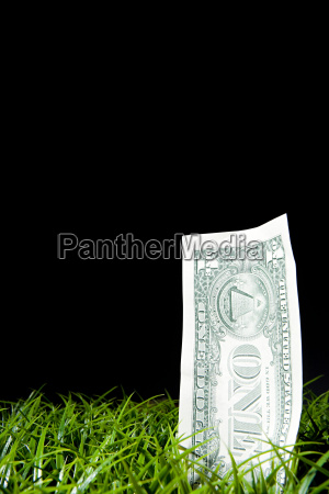 one dollar note growing from lawn