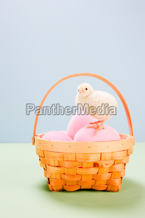 chick standing on pink eggs in