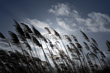 grass blowing in breeze