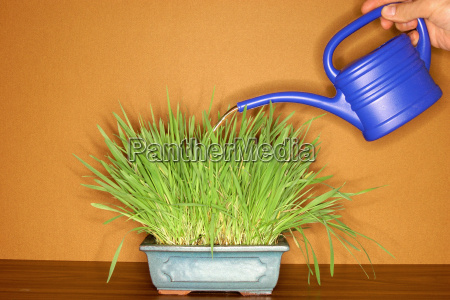 watering can and plant