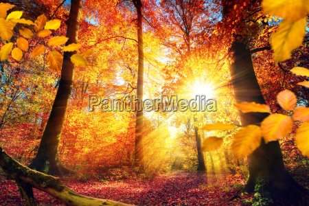 picturesque autumn in the forest with