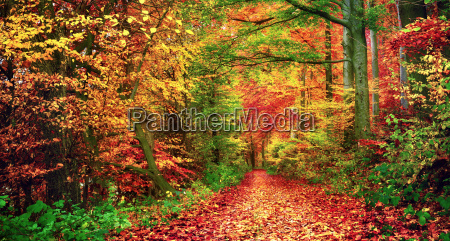 colorful forest in autumn invites you