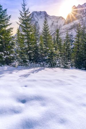 wintersonne ueber den wald und die