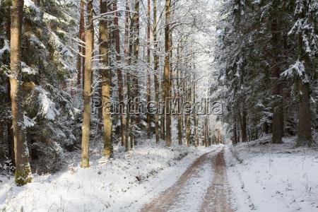 strasse die den winterwald durchquert