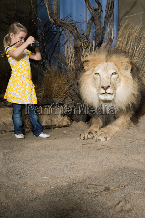 girl photographing a stuffed lion