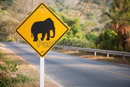 elephant road sign in phuket