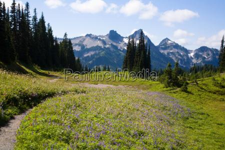 mount, regenreicher, nationalpark, und, tatoosh, berge - 18786316