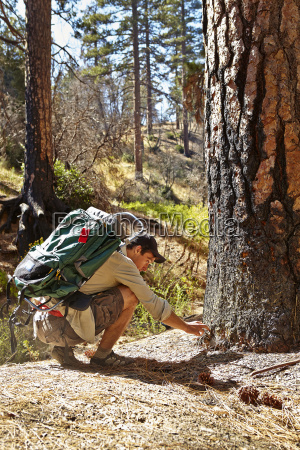 young male hiker examining burnt tree
