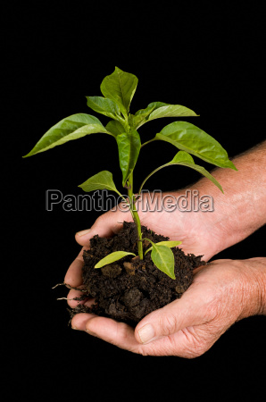 person holding tree sapling