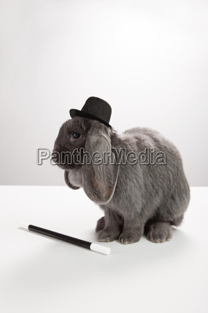 rabbit wearing top hat with magic