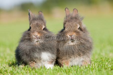 braun braeunlich bruenett kaninchen outdoor freiluft