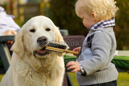 kleiner junge laesst golden retriever einen