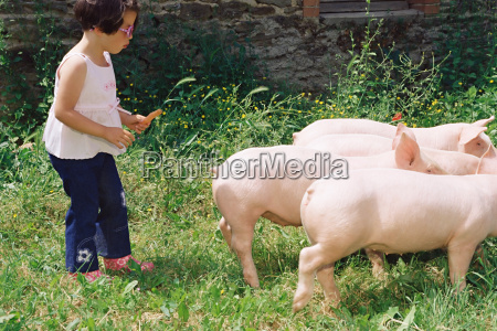girl following a group of pigs