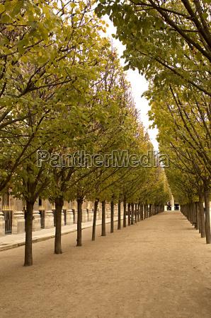avenue of trees at palais royal