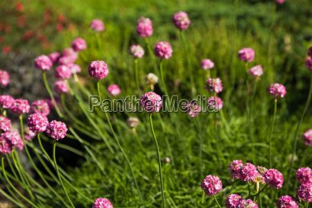 umwelt blume pflanze gewaechs sommer sommerlich