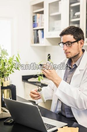 scientist examining plant in laboratory at