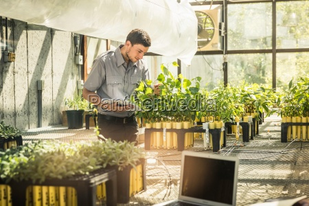 scientist examining plants in plant growth