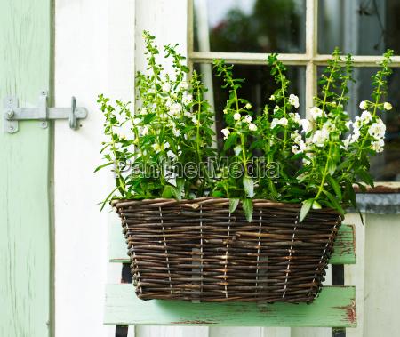 daheim zuhause garten blume pflanze gewaechs