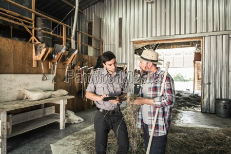 two scientists examining straw grass in