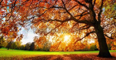 beautiful oak on meadow under the